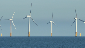 The RSPB's hypocrisy and absurdity on windfarms 'knows no bounds'