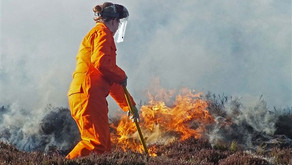 Yet another wildfire, and yet another denial of the truth