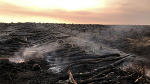 Millions of tonnes of carbon released from preventable wildfires on RSPB managed land