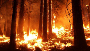New study highlights how the use of controlled burning can help save human lives