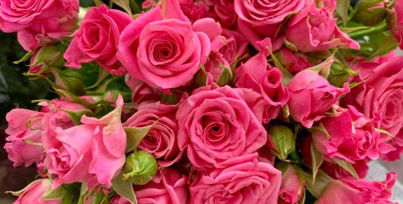 Rose branchues (5 tiges)