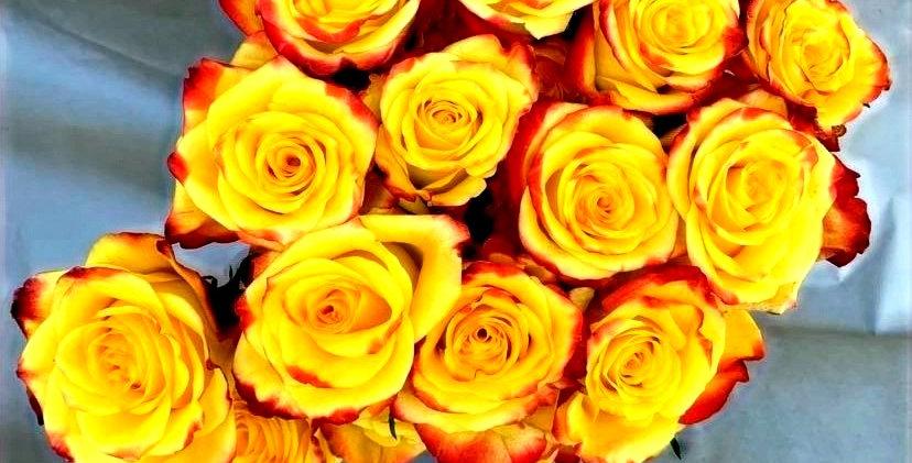 Rose - bicolore (10 tiges)