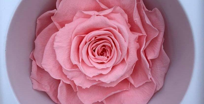 Rose éternelle grand format