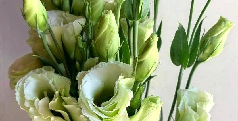 Lisianthus - blanc vert (5 tiges)