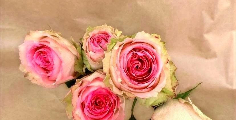 Rose - espérance (10 tiges)