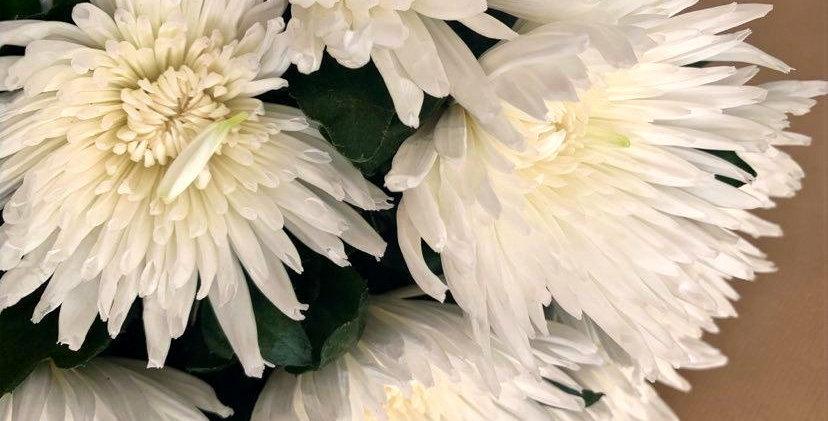 Chrysanthème (5 tiges)