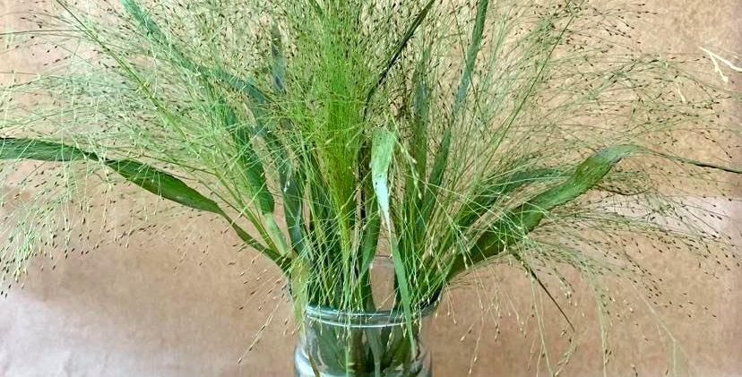 Vase Servent - Vert