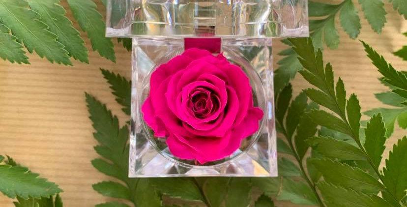 Copie de Rose éternelle dans son écrin