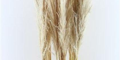 Pampa - Blanc (10 tiges)