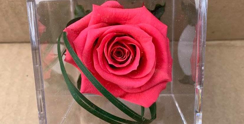 Rose éternelle dans son cube
