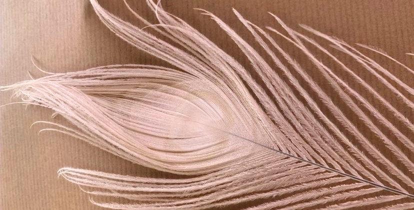 Plume de paon (par plume)