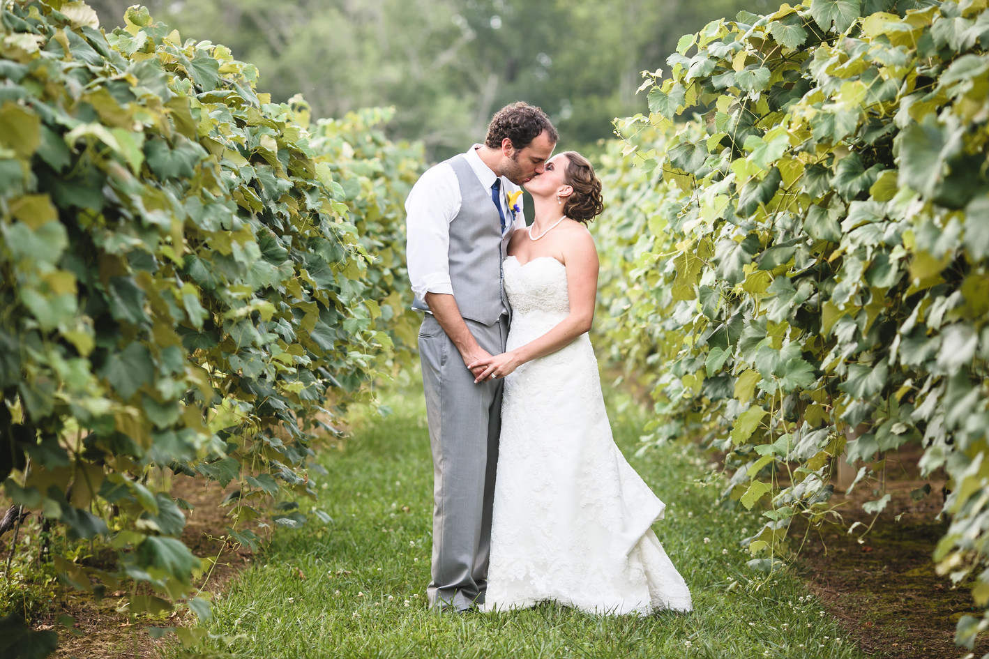Vineyard Wedding Shot