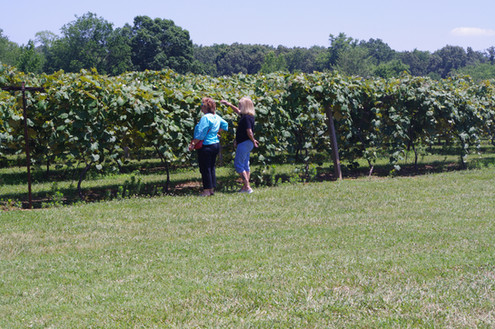 Checking out the vines