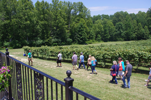 Touring the Vineyards