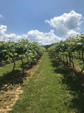 Take a walk through the vineyard
