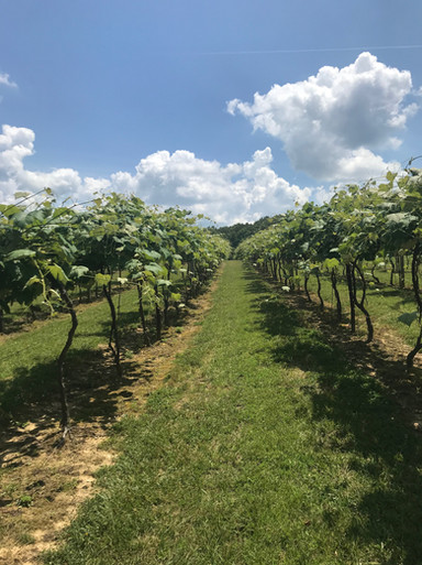Take a walk through the vineyard