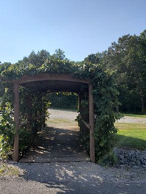 Concord Vines