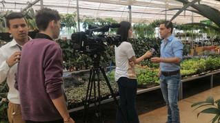 Entrevista no programa Manhã Total sobre os benefícios e desafios das plantas dentro de casa ou escr