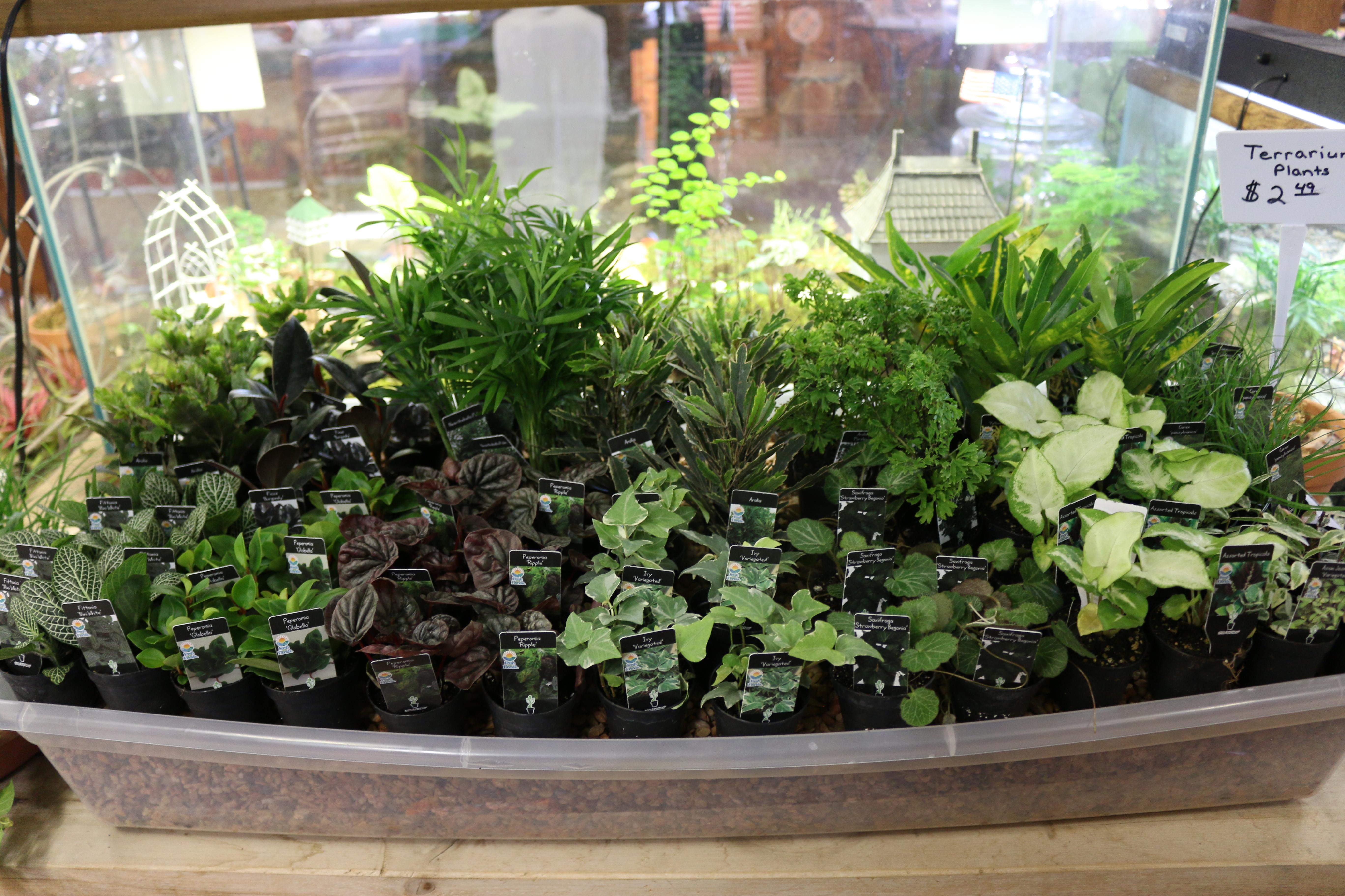 Mini Plants2.jpg