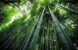 bamboo 2.png