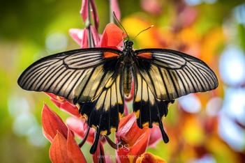 Butterflies at Prague Botanical Garden