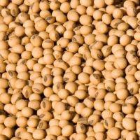 soybean heat treated full fat.jpg