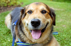 adorable-animal-canine-162349