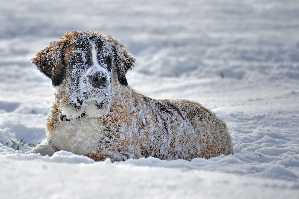 https://www.petmd.com/dog/care/how-cold-too-cold-dog