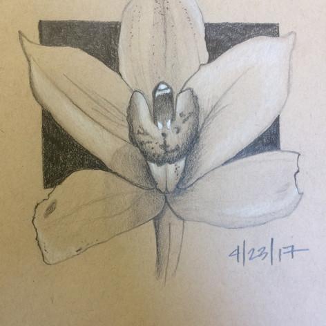 """""""Flower"""" 2017"""