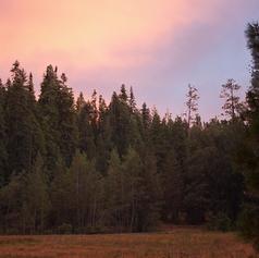 Big Tree State Park