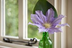clemitice flower