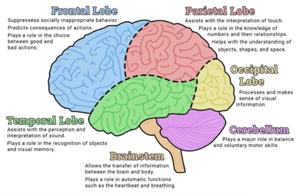 Vascular Dementia: The Heart & Mind