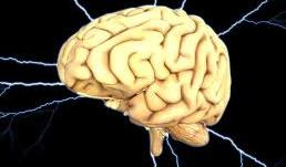 Business Edge Neuroscience:  The Executive Brain