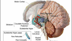 Parkinson's Dementia: From Motor Function to Cognition & Protein Deposits