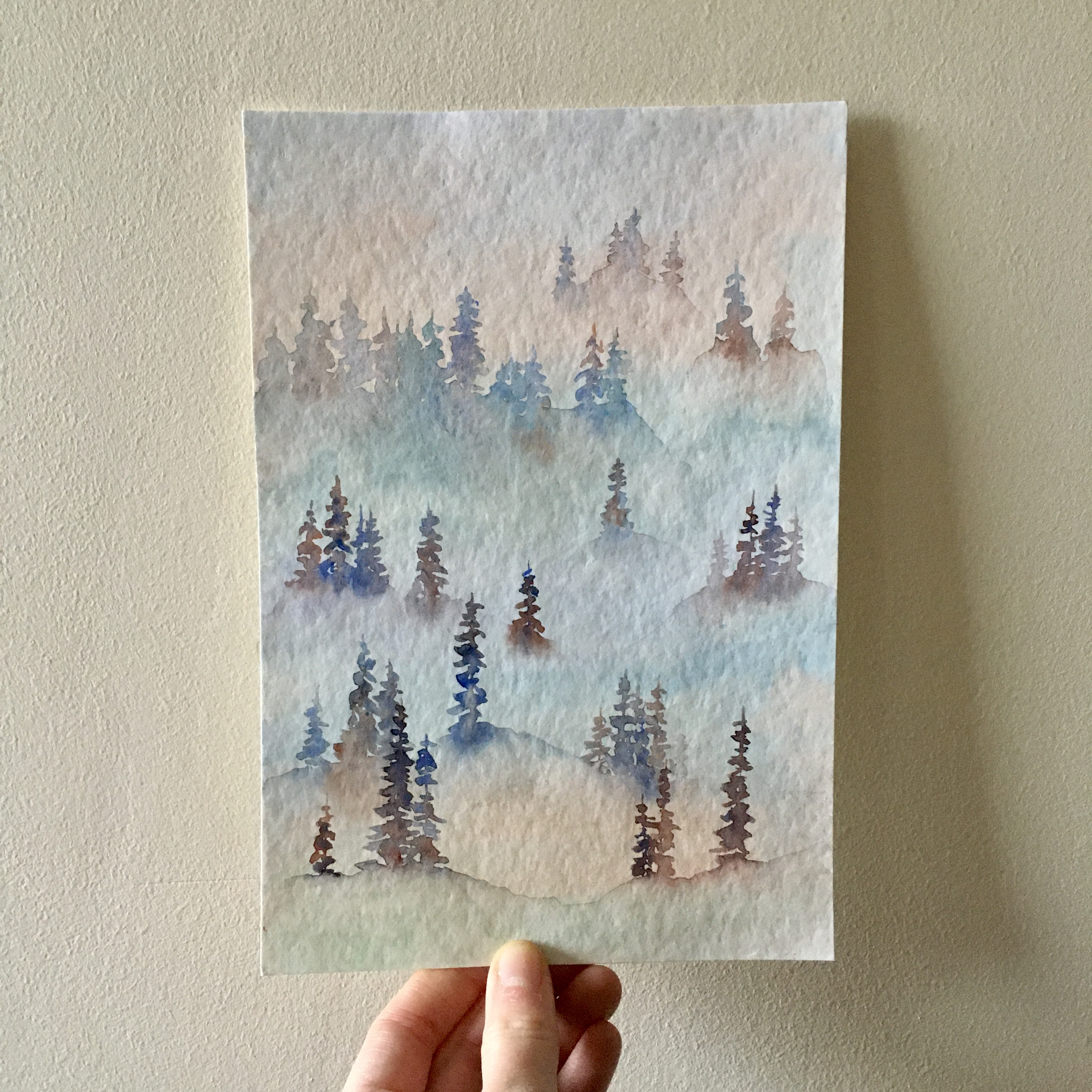 Misty Pine Trees.