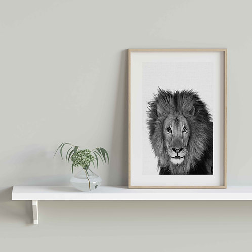 framed vintage lion poster by David Richard designs.