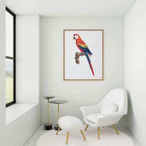 framed vintage parrot poster by David Richard designs.