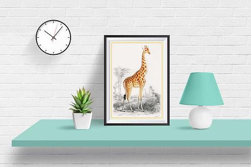 framed vintage giraffe poster by David Richard designs.