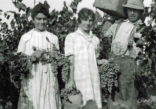 Early California winery & vineyard   Napa Organics