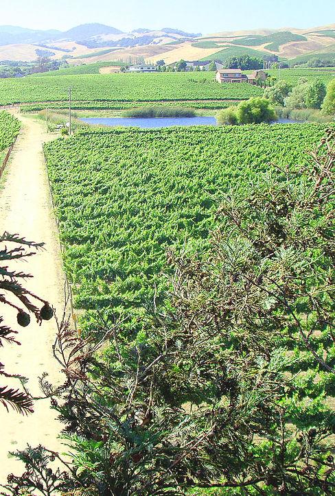 Corotto Vineyards | Carneros Napa Valley | Dealy Lane