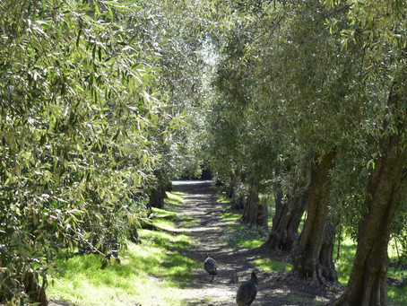 Permaculture Skincare