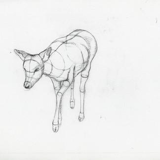 Sketch - Deer.jpg