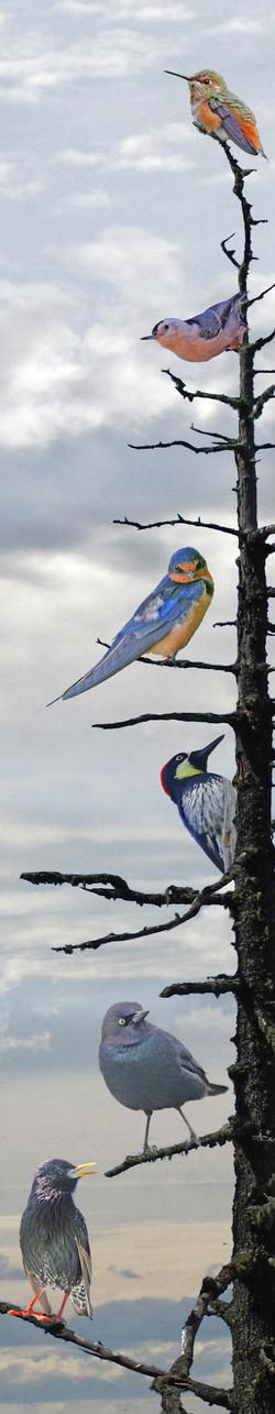 17-45 The Bird Tree