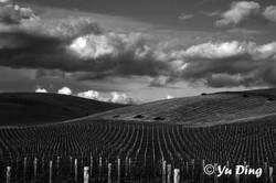 17-19 Vineyards in Winter