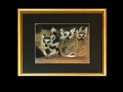 17-04 Three Mircats