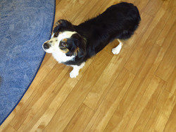 Firmenhund Ruby :-)