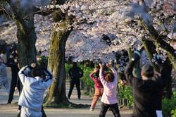 桜とラジオ体操.jpg