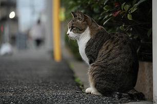 地域猫1.jpg