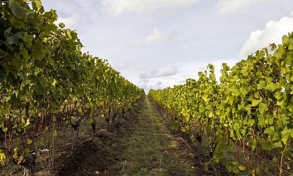Kinvah winery.jpg