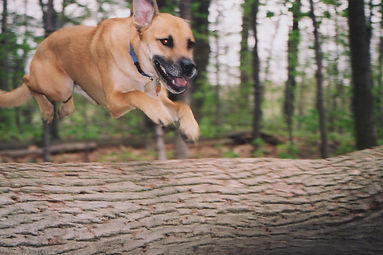 rugby jumping over log 2.jpg